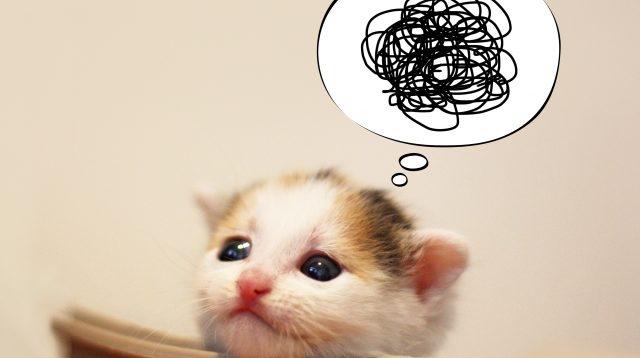 猫 悩み 課題